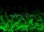 Halloween Spooky Green Smoke 1
