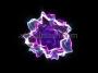 Germ 1 - Magenta Blue